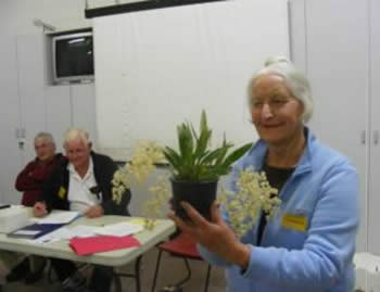 Barb Pearce with her Oncidium